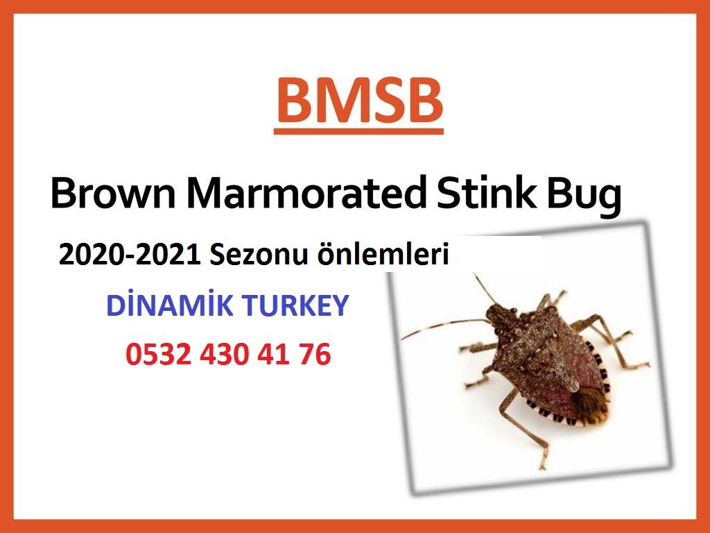 Brown Marmorated Stink Bug (BMSB) için risk sezonunun 1 Eylül 2020 ile 30 Nisan 201 arasında olduğunu bildirmek istiyoruz.